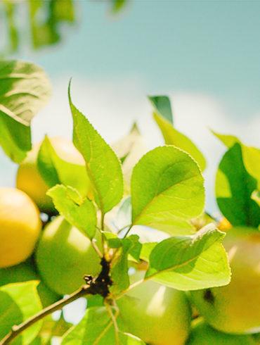 Gesunde Zutaten, einfaches Frühstück, selbstgemachtes Gelee, Gelee kochen, Gelee Rezept, Gelee ohne Gelantine kochen