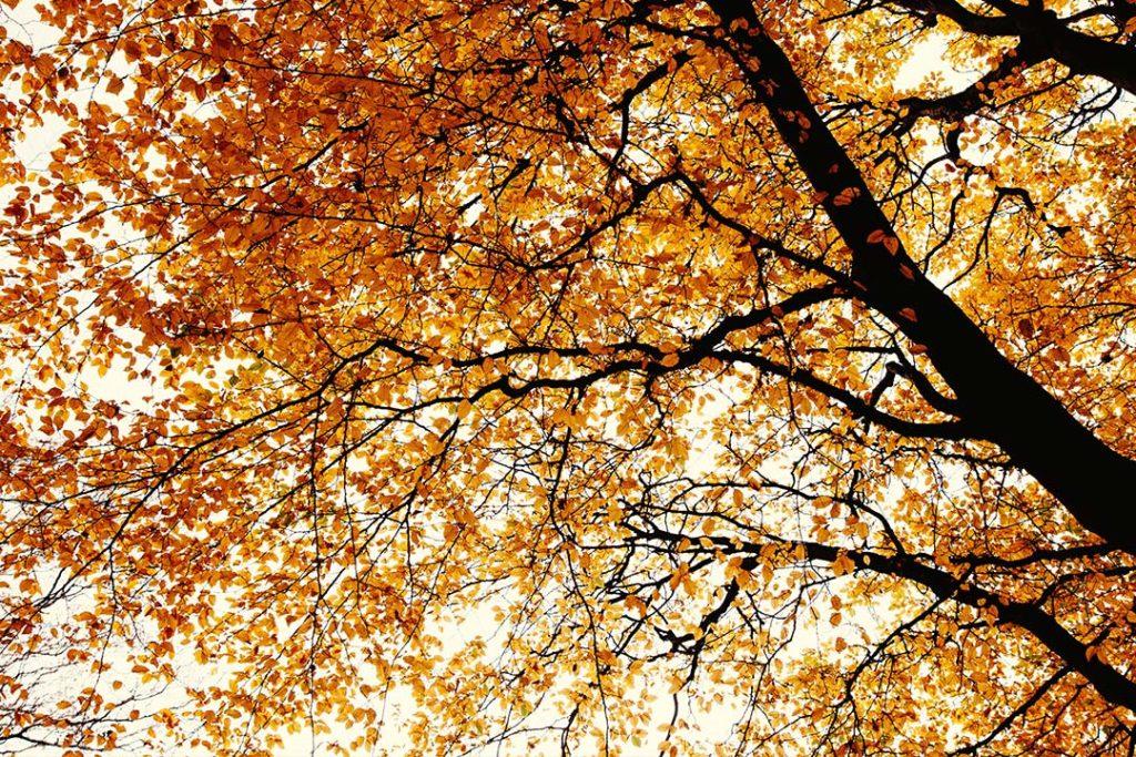 Winterblues, Herbstblues, Winterdepression, Sonne, Herbst, Joahnniskraut, Müdigkeit, Winterschlaf, Tageslichtlampen