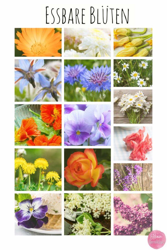 essbare blüten, essbare blüten kaufen, essbare blumen, essbare blüten rewe, kornblume, essbare blüten anbauen, essbare blüten rezepte, essbare blüten zum dekorieren,